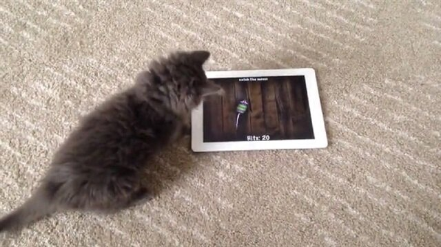 Mouse app for cats ipad