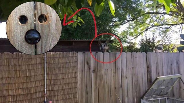 Komşusunun köpeğini dahice bir yöntemle kurtaran harika komşu: Ne çile çekmiş zavallı...