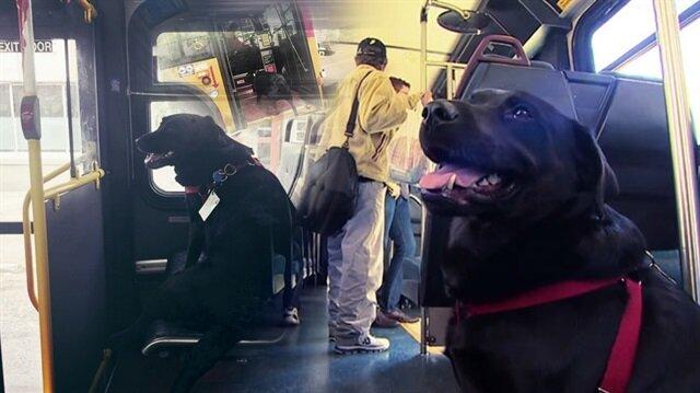 Her gün tek başına otobüsle seyahat eden dünyalar tatlısı köpek: Eclipse