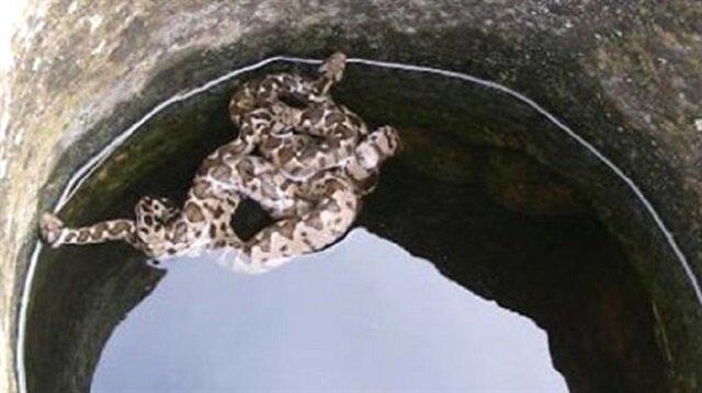 Yılanları kuyudan çıkarmak için 21 ton su bastılar