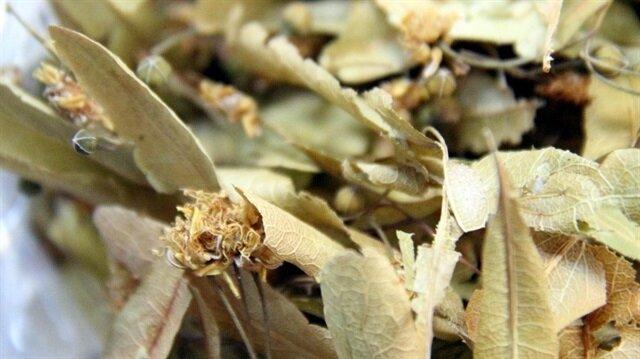 Şifa kaynağı çiçek ıhlamurun kilosu 200 TL