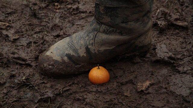 Yeşil mandalinaların turuncu mandalinalarla savaşı: Mandariinid