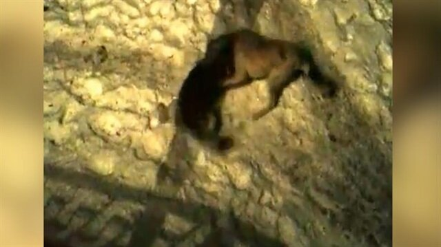 'Kurdun evin önündeki kangala yakalanması' iddiası