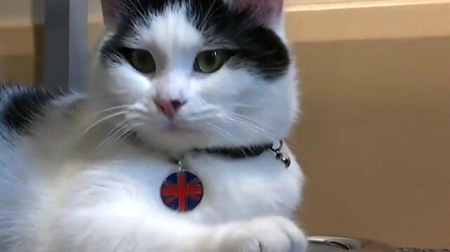 Hayvan barınağından büyükelçiliğe! İngiltere'nin ilk diplomat kedisi