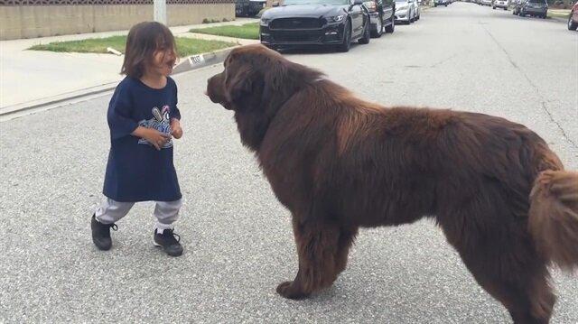 Newfoundland köpekle çocuğun muhteşem arkadaşlığı