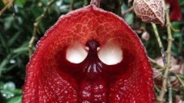 Birçoğunun adını ilk kez duyacağınız bitkiler ve meyveler