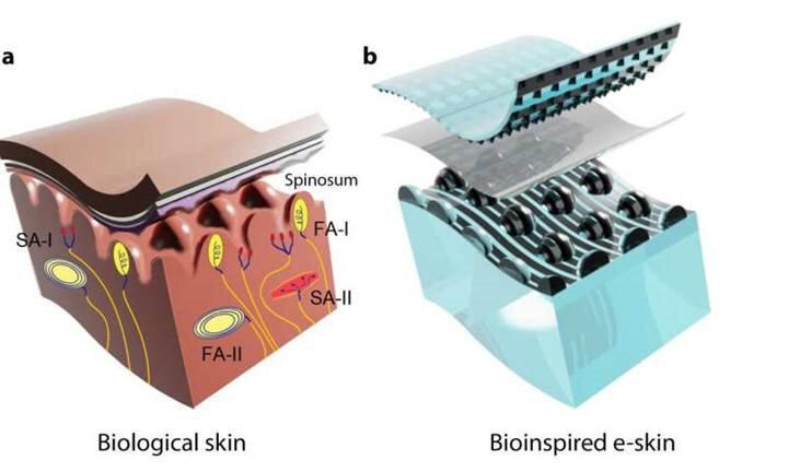 Biyolojik temelli eldiven b seçeneğinde görülebiliyor.