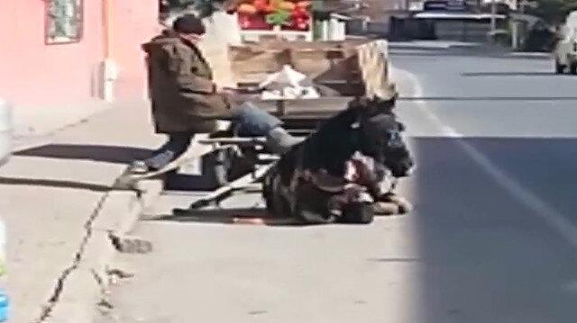Vicdansız adam yorgunluktan yere düşen atını kaldırmak için tekmeledi