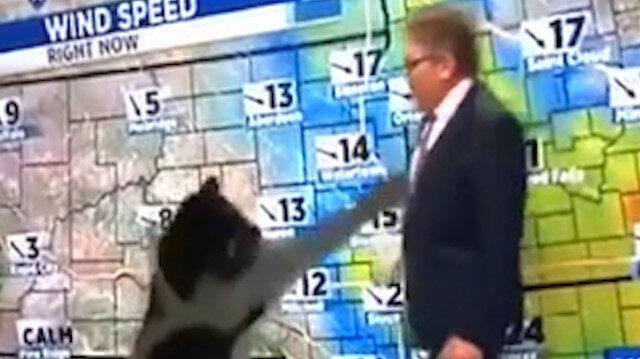 Televizyonun önünde spikeri yakalamaya çalışan kedi gülümsetti