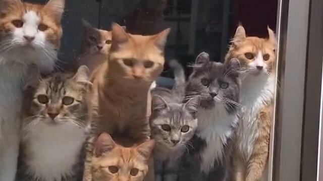 Bu kediler nereye bakıyor böyle