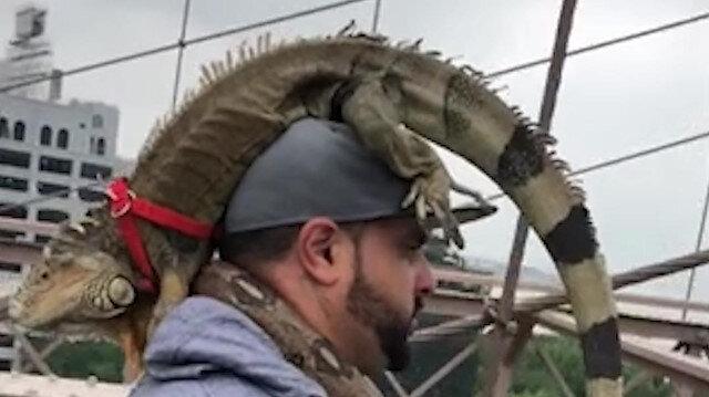 Başında iguana boynunda yılanla yürüyüşe çıkan adam görenleri şaşırttı