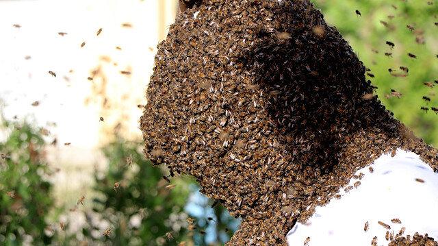 🐝'Vanlı arı adam' dünya rekoru kırmak için binlerce arıyı üzerinde topladı