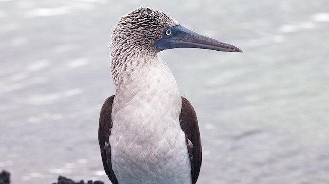 Burası Galapagos ve gördüğün her şey gerçek! ☀😌