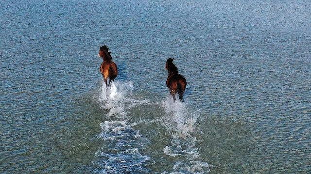 Gediz Deltası'nın yılkı atları