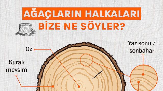 Ağaçların halkaları bize ne söyler?