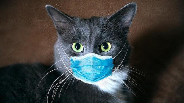 Hangi hayvanlar yeni pandemilere neden olabilir?
