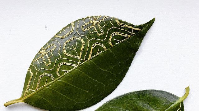 Yapraklara işlenen sanat