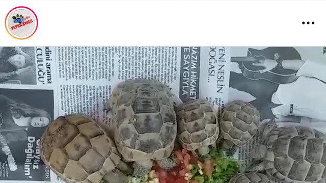 Kaplumbağa Terbiyecisi bu dönemde resmedilseydi