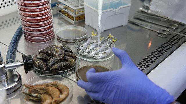Uzmanlar araştırıyor: Müsilaj Marmara'daki balıkları nasıl etkiledi?