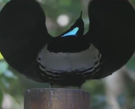Ormanın Tiesto'su