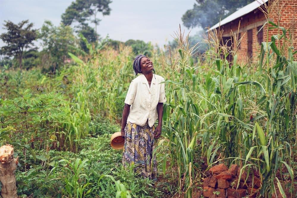 Uganda Bukoyo'daki mısır tarlasında mısır toplayan kadın, kamerayı görünce neşeyle poz veriyor